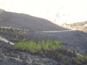 το δασίλειο πάνω απο το φαράγγι στα δυτικά. Απο εδώ μεταδόθηκε η φωτιά κάτω στο ποτάμι